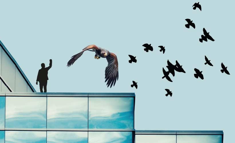 La Potenza del Volo - Bird Control - Allontanamento Piccioni