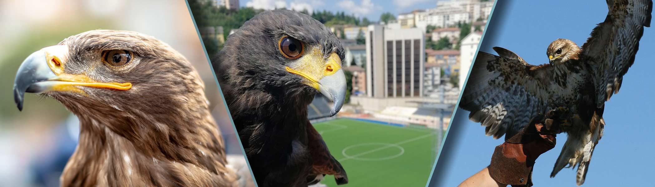 La Potenza del Volo - Spettacoli - Bird Control - Didattica e Visite Guidate - Corsi di Falconeria